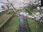 2011年4月 二ヶ領用水花見 2