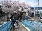 2011年4月 二ヶ領用水花見 14