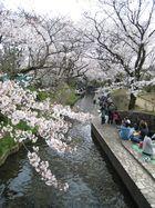 2011年4月 二ヶ領用水花見 18