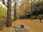 2016年11月クラブラン 昭和記念公園 03
