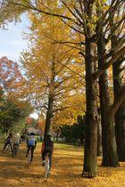 2016年11月クラブラン 昭和記念公園K 07