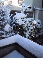 2001年1月21日の雪